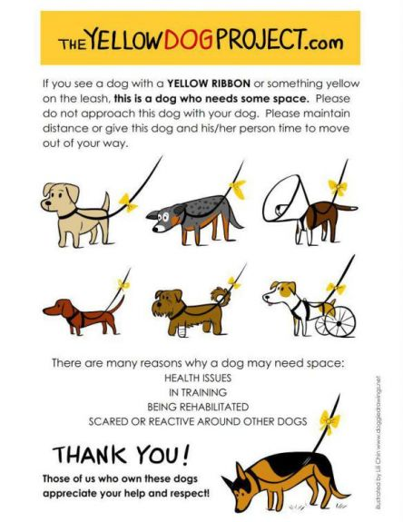 the-yellow-dog-project-yellow-ribbon